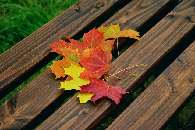 Fall Leaves on Wooden Deck