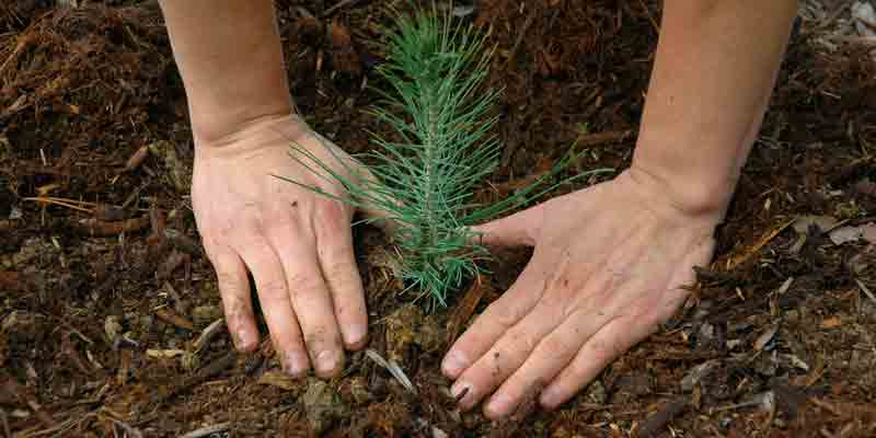 Planting Seedling in a Sustainable Landscape