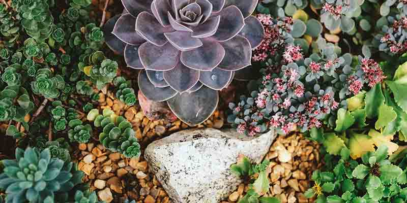 A Sustainable Landscape Using Succulents and Xeriscaping