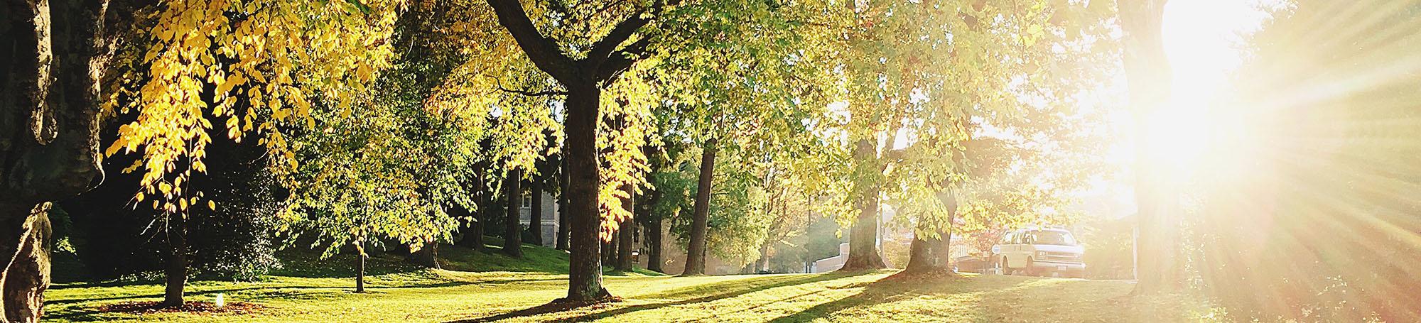 Sun shining in a park.