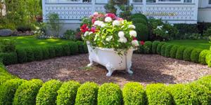 A Circle of Bushes Surrounding a Flower Pot.