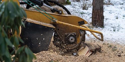 A Stump Grinder Cutting a Tree Stump