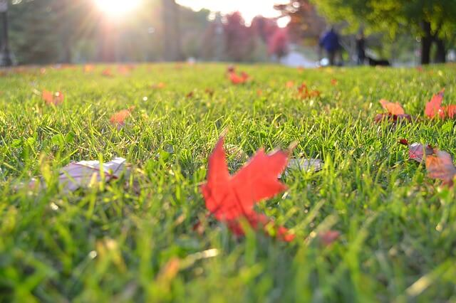 Image of a Lawn With Fall Leaves