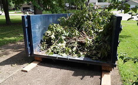 Dumpster Full of Tree Branches and Other Yard Debris.