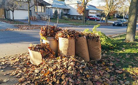 Yard Waste Bags Full of Leaves at Curb in Residential Neighborhood.