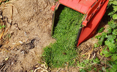 Grass Clippings on the Ground.