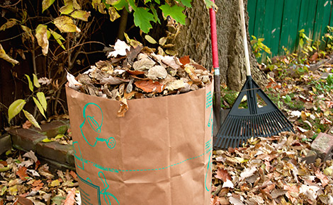 Yard Waste Bag Full of Leaves With a Rake in the Background.